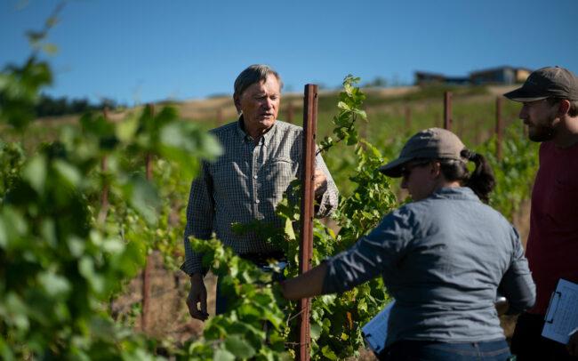 Talking through the vines at Brittan Vineyards