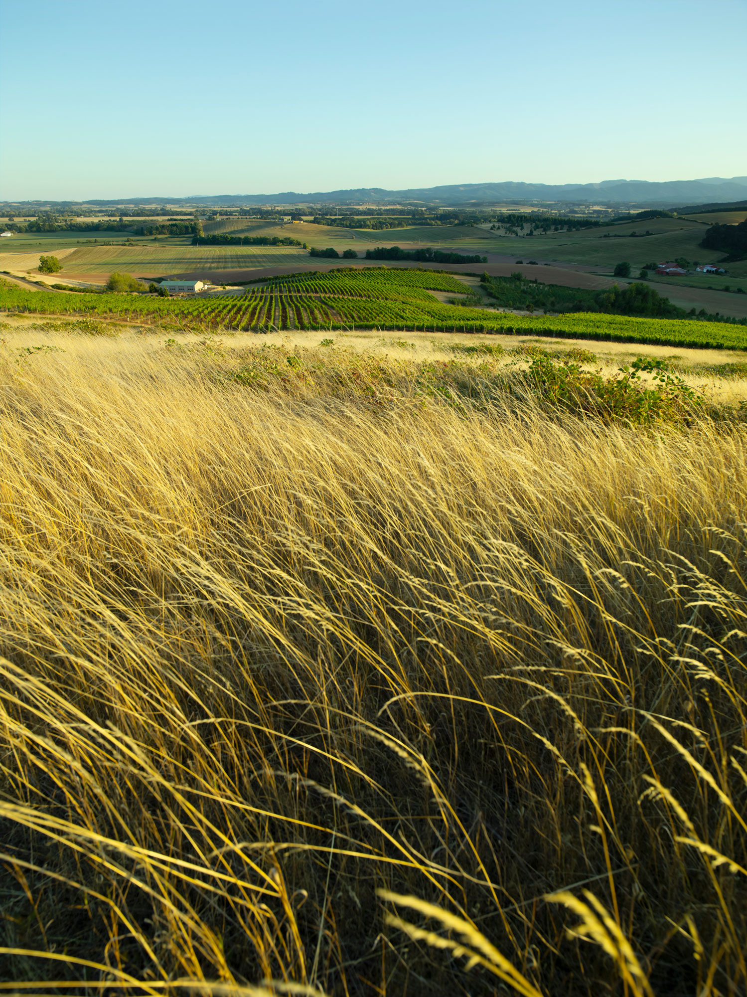 Top of the hill above Brittan Vineyards